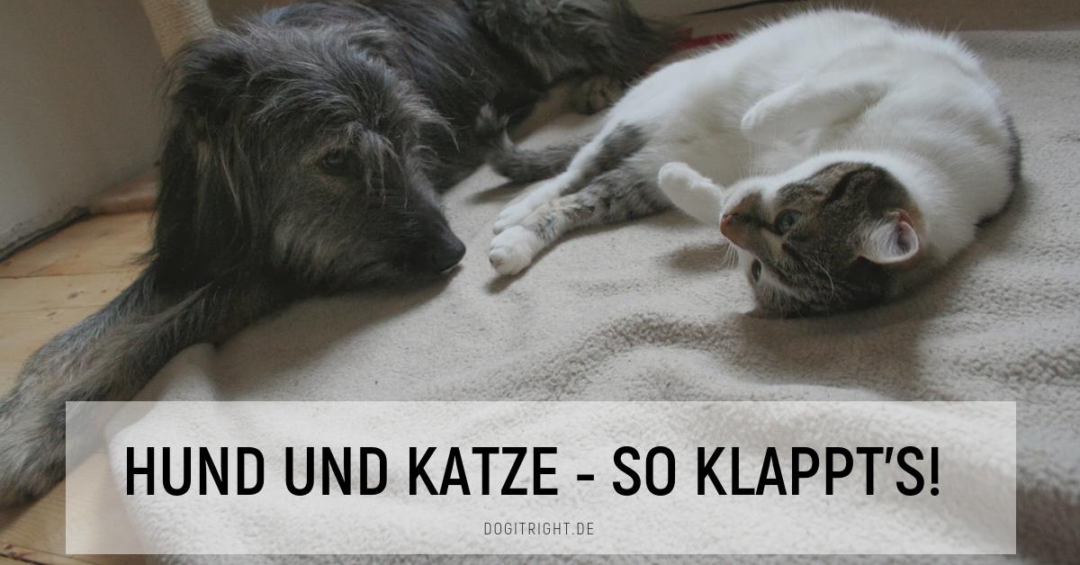 Hund und Katze – so klappt\'s! - 5 Tipps für das Zusammenleben